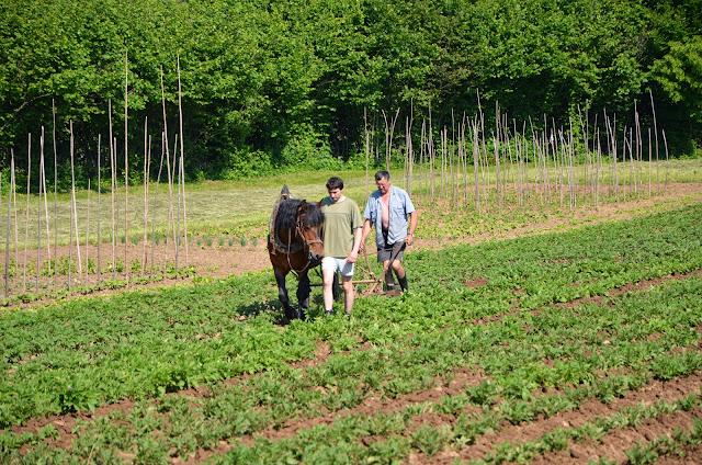 Kmetijstvo-agriculture - DSC_0658.jpg