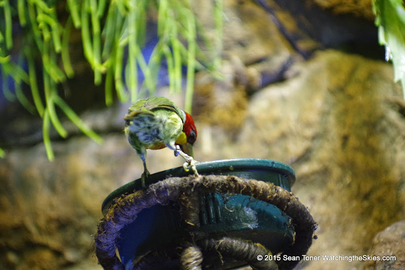 03-11-15 Dallas World Aquarium - _IMG1015.JPG