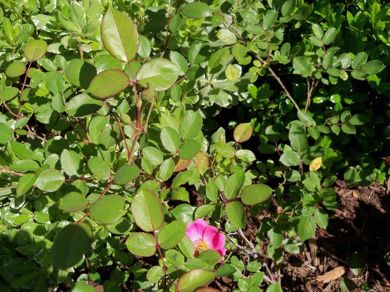 Gardening 2010 - 101_1374.JPG