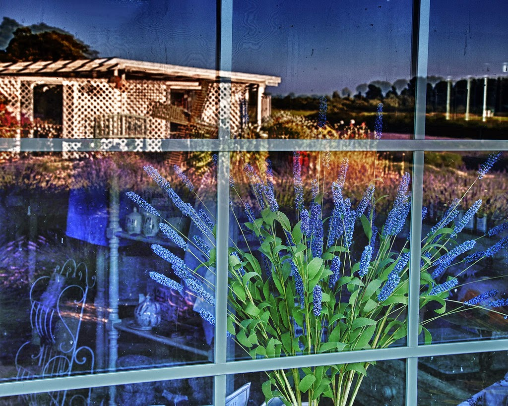 """Lavender Farm Reflection"" by Steve Bailey - 3d place A special"