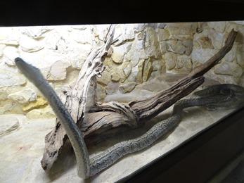 2017.08.07-021 python de Seba