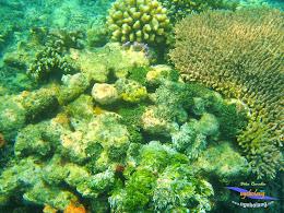 pulau harapan 8-9 nov 2014 diro 08
