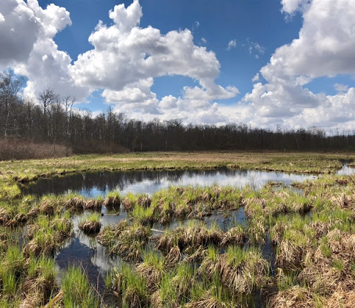 Spring scene over Kohlepp's pond