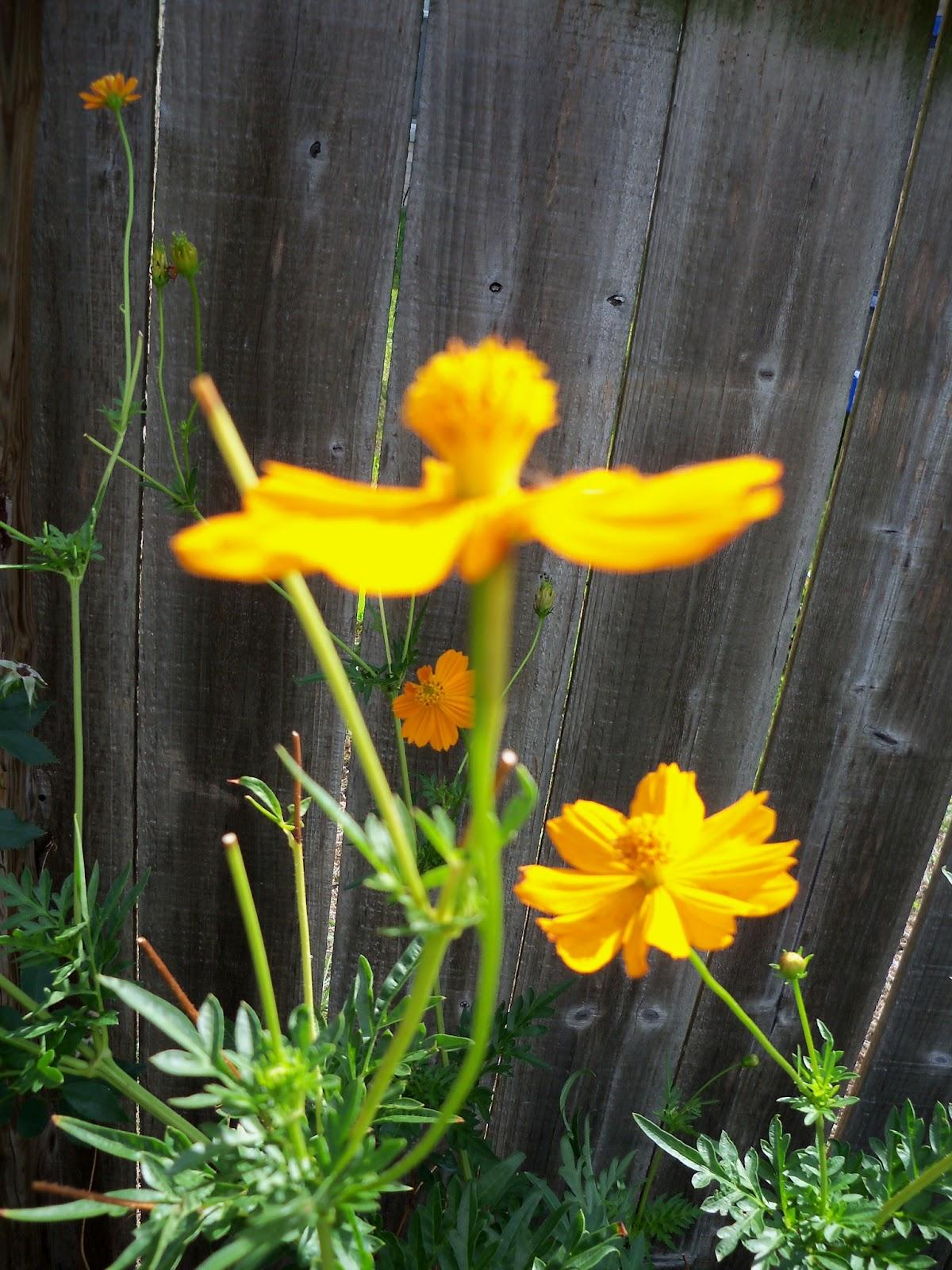 Gardening 2011 - 100_9992.JPG