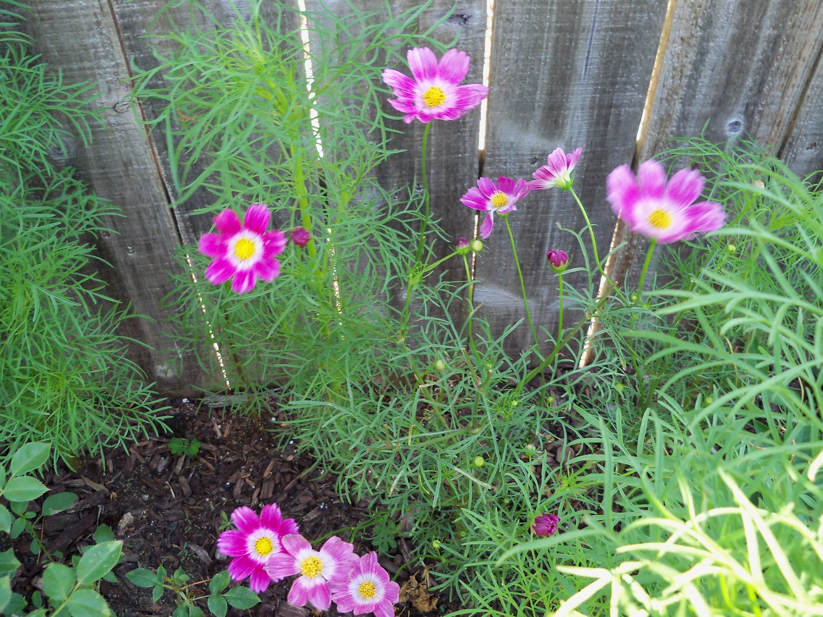 Gardening 2010, Part Two - 101_2584.JPG