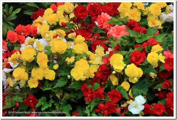 160906_Butchart_Gardens_0034