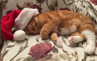 Ripple sleeping on Christmas Day~