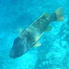Deze vriend zwom met je mee bij het snorkelen