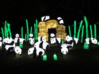 2018.12.03-077 grands pandas