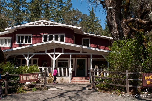 Visiting Calistoga's Petrified Forest