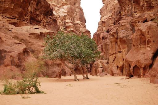 Кусты в долине Wadi Rum