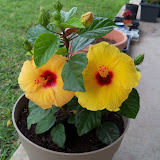 Gardening 2010 - 101_1428.JPG