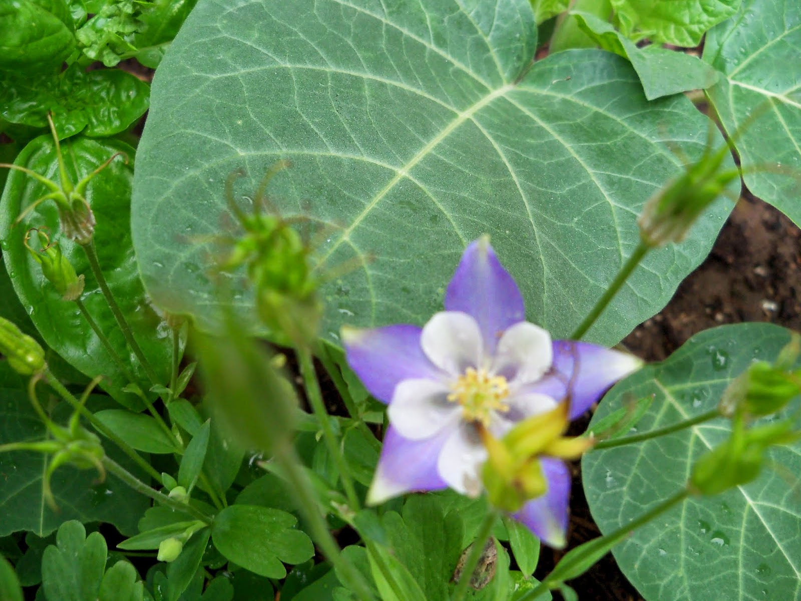 Gardening 2014 - 116_1845.JPG