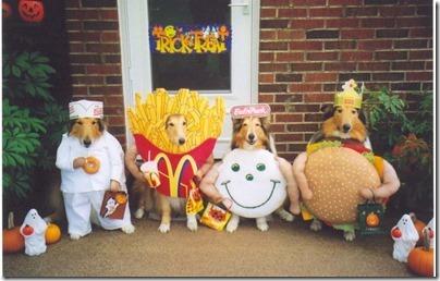disfraces divertidos para perros  (11)