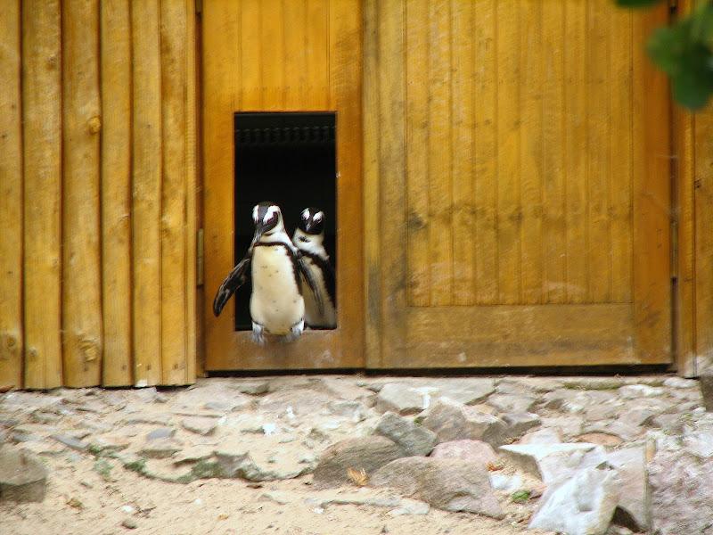 Warszawskie zoo - img_6406.jpg