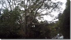 Pretty tree-1