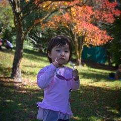 2011 04 25 Mt Lofty Botanic Garden - IMG_6419.jpg