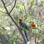 2008_04_21_Adelaide