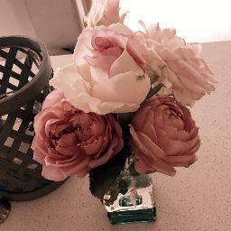 Rose Choi Photo 17