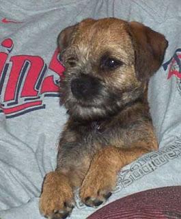"Mardi / Killian puppy.""Cosmo"""