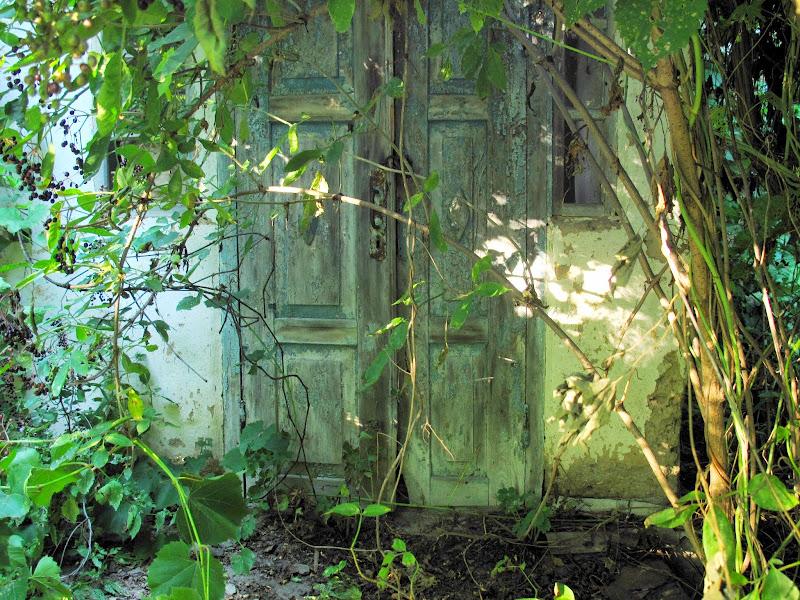 Картинка заброшенной сад