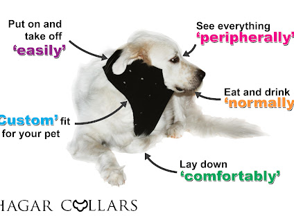 Best Dog Recovery Collar