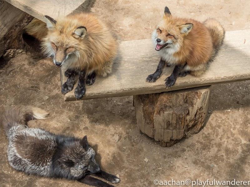 foxvil (39 - 70).jpg
