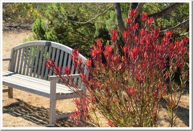 160813_UCSC_Arboretum_065