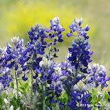 2013 Spring Flora & Fauna - IMGP6451.JPG