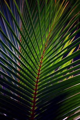 Immersion jungle de Guyane