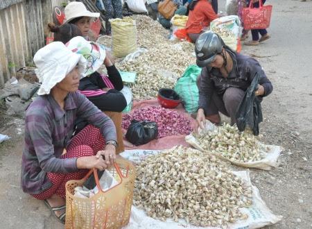 Giá tỏi Lý Sơn tăng cao vì mất mùa ở chợ, chưa được khách du lịch chọn mua vì không có bao bì và nhãn mác.