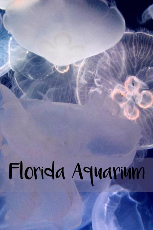 [aquarium%5B3%5D]