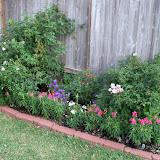Gardening 2011 - 100_8148.JPG