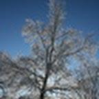 tn_lachaux-2010-12-32.jpg
