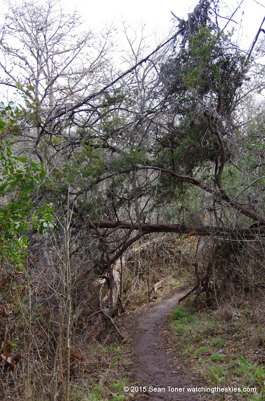01-25-14 Texas Hill Country after an Ice Storm - IMGP1188.JPG