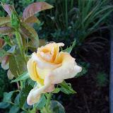 Gardening 2010, Part Three - 101_3998.JPG