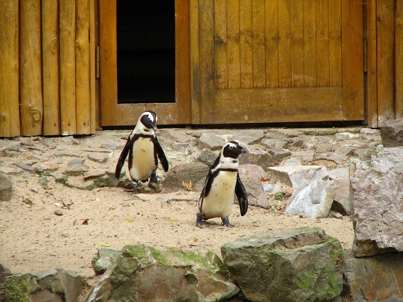 Warszawskie zoo - img_6409.jpg