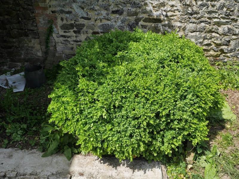 Un jardin en formation P1020931
