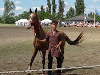 Az aranyszőrű lovak bemutatója (Kép - HE).JPG