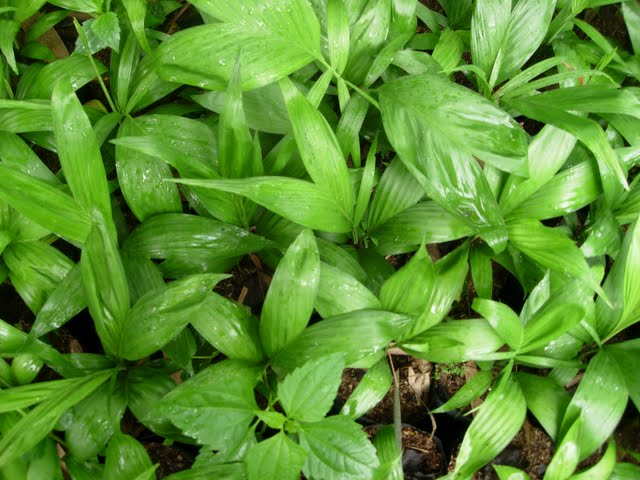 Grow Fresh Air Plants - DSCN2917.JPG