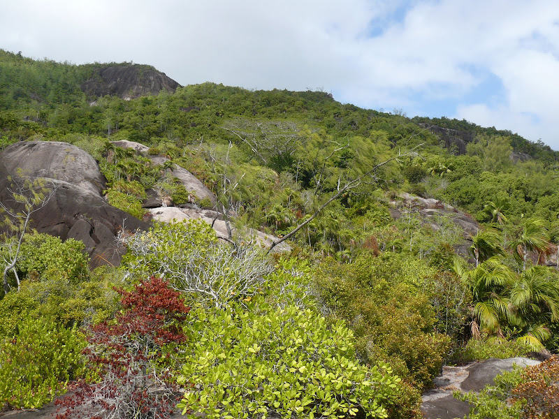 Trekking tra Danzil e Anse Major (Mahè)