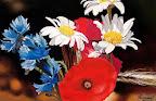 La Campagne en bouquet 50 x 40 Février 2005