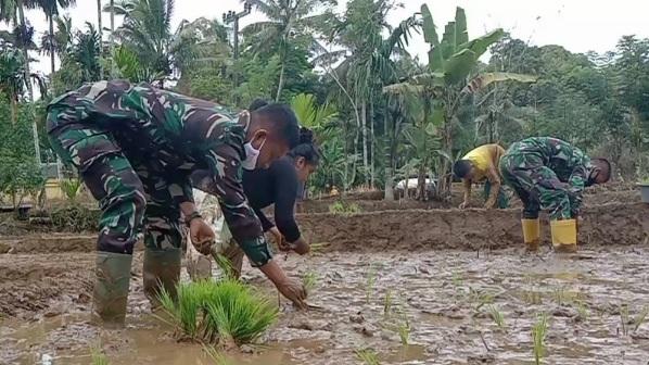 Senang, Satgas Prada Ahmad Wahidin Giat Bantu Petani Tanam Padi