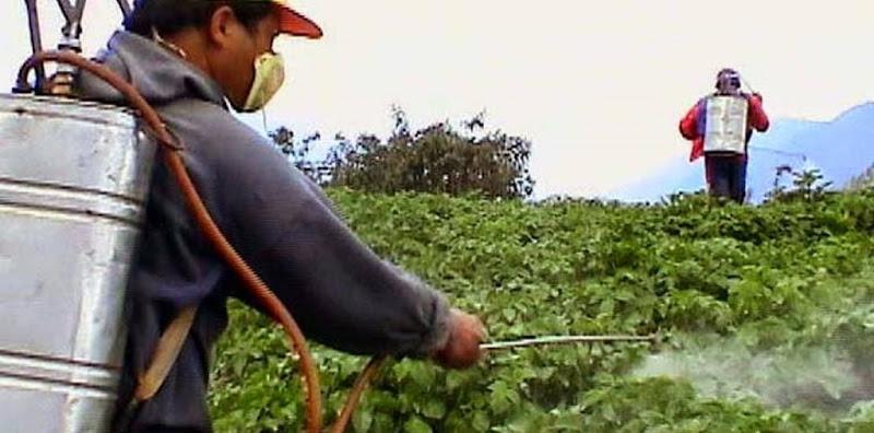 credito-rural-no-valor-de-r-922-mil-beneficiara-agricultores-de-assentamento-em-mt