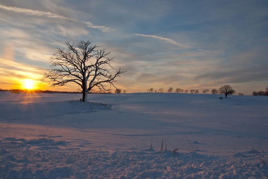 Winter Oak Sunset by Scott Hull - Novices Only Landscapes