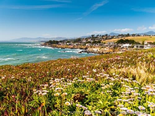 Coastal Bluff Trail Wildflowers Cambria California