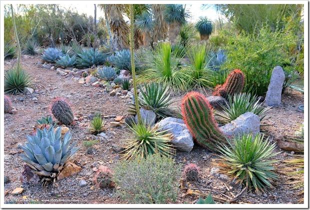 151229_Tucson_GregStarr_Ferocactus-pilosus_0002