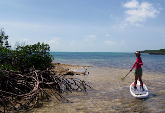 Photo: Exploring the mangrove creek on Hoffman Cay