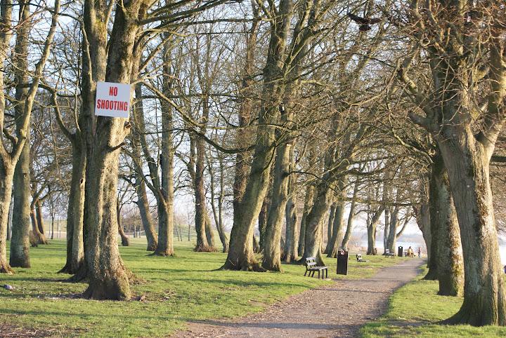 Oikeasti tuo oli joku ihme suojeltu puisto.