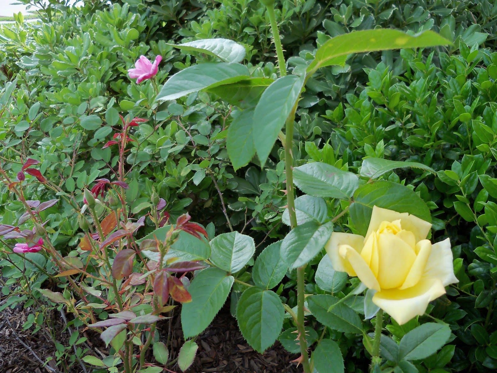 Gardening 2010 - 101_1441.JPG
